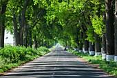 Romania, Danube River Delta, Salcioara, country road.