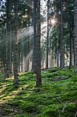 Germany, Baden-Wurttemburg, Black Forest, Titisee-Neustadt, Neustadt town, morning light in The Black Forest.