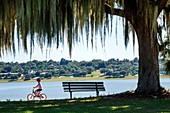 Florida, Lake Wales, Lake Wailes, public park, Spanish moss, hanging, girl, riding, bicycle, safety helmet, bench, water, scenery.