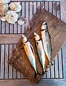 Mackerel fish, Grebbestad, bohuslan region, west coast, Sweden.
