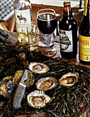 Oysters at Everts Sjobod, Grebbestad, bohuslan region, west coast, Sweden.
