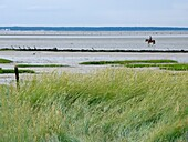 Horse rider in mudflats at Island Neuwerk, Elbe estuary, North Sea, Hamburg, Germany.