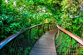 Tree Canopy Walkway, Kirstenbosch National Botanical Garden, Cape Town, South Africa.