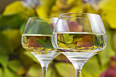 Two glasses of white wine