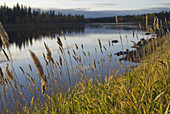 bank of the Kemijoki River, Savukoski region, Lapland, Finland, Northern Europe.