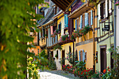 Alley with colorful half-timbered houses decorated with flowers, Eguisheim, Alsace, France
