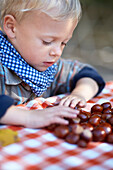 Boy sorting chestnuts
