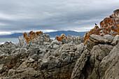 rocks at Walker Bay Nature Reserve, Gansbaai, Western Cape, South Africa