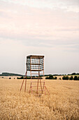 high seat at wheat field, Hainich National Park, Thuringia, Germany