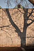Schatten von einem blattlosen kahlen Baum an Mauer im Schlosspark, Stuttgart, Baden-Württemberg, Deutschland