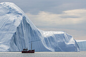 A commercial iceberg tour amongst huge icebergs calved from the Ilulissat Glacier, a UNESCO World Heritage Site, Ilulissat, Greenland.