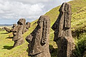 Moai sculptures in various stages of completion at Rano Raraku, the quarry site for all moai on Easter Island, Isla de Pascua, Rapa Nui, Chile.