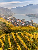 The village Spitz in the Wachau. The Wachau is a famous vineyard and listed as Wachau Cultural Landscape as UNESCO World Heritage. Europe, Central Europe, Austria, Lower Austria.