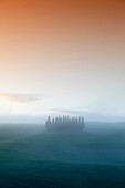 A grove of cypress trees on green hills, near San Quirico d`Orcia, Val d´Orcia, Tuscany, Italy.