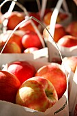 Apples for sale at Clarkdale Fruit Farms, Massachusetts, United States.