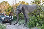 Elephant bull at a jeep in Krueger National park, South Africa, Africa