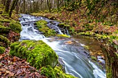 Venford Brook, Dart Valley Nature Reserve, Dartmoor National Park, Holnd, Devon, England, United Kingdom, Europe.