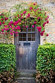 Red roses over front door to cottage home in the Cotswolds, Gloucestershire, England, UK.