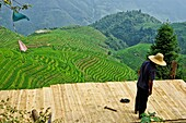 Man works in the amazing rice terraces of LongJi in Guangxi, China.