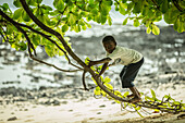 Little native boy climbing on a branch of a tree, Sao Tome, Sao Tome and Principe, Africa