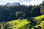 grüne Wiesen, idylle, Hütten, Alm, romantisch, traditionelle Häuser, Bergen, Berglandschaft, Bauernhäuser, Hütte, Almwiesen, Bregenzerwald, Landwirtschaft, Vorarlberg, Österreich