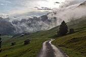 Feldweg nach dem Regen, Wolken, Nebel, Bergen, Hütten, grüne Wiesen, idylle, romantisch, Heuhütten,  Berglandschaft, Hütten, Almwiesen, Landwirtschaft, Bregenzerwald, Vorarlberg, Österreich