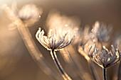 Morning frost Scotland Uk.