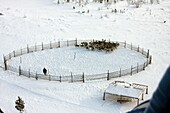 Small peoples of the Russian North. Yamal-Nenets Autonomous District. Herders camp. North habitation of shepherds deer herd. Nenets reindeer herders.
