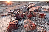 Alien Landscape, Petrified Logs, Petrified Forest National Park, Arizona.