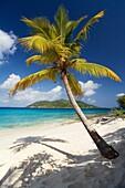 Palm Tree on Sandy Island, British Virgin Islands.