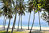 Palm-fringed beach at the southern East Coast of Kenya.