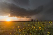 Severe supercell storm drops southeast in northern Kansas as the setting sun shines underneath.