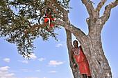 Massai on their lookout, Masai Mara, Kenya.