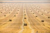 Cereal fields, Almansa, Albacete province. Spain.