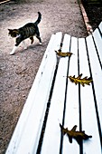 A cat walks next to a seat with leaves in the Botanical Garden, Valencia, Spain.