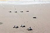 Turtles Release Eco Tour. san diego beach.