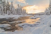 Wassara river with old wooden bridge, open water, sun reflecting in the water, snowy trees and snow on the rocks in the water, Gällivare, Swedish Lapland, Sweden.