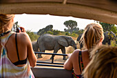 two tourists in jeep filming passing elephant herd on the road