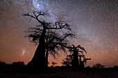 Night time landscape photo of boabab trees against a starry night sky. Kubu Island, Makgadikgadi pans, Botswana.
