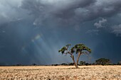 Landscape view of dramatic thunderstorm conditions over a dry desert landscape. Namib Rand, Namibia.