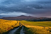 Landscape photo of warm sunlight below stormy skies in the hills of Tuscany. Val D´Orcia, Tuscany, Italy.