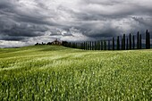Landscape photo of a Tuscan villa in a wheat field below stormy skies. Val D´Orcia, Tuscany, Italy.