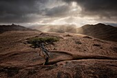 Landscape photo of a small tree atop a rock over looking a mountain valley. Richtersveld National Park, South Africa.