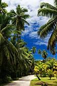 Landscape photo of a palm-lined road on a tropical island estate. La Digue Island, Seychelles.