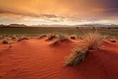 Landscape image of a dramatic and colourful sunrise over grassland dunes. Namib Rand, Namibia.