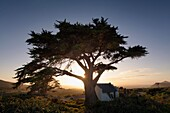 Wide angle photo of a historic cottage below an old pine tree at sunrise. Cape Point National park, Cape Town, South Africa.