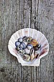 Mixed selection of seashells inside a Scallop shell on weathered timber decking.