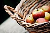 Apples in willow basket Variety Cox on rustic timber table.