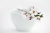 Blossom over white ceramic bowl