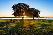 Sunrise with view of trees located at Crown Point Shores Park. San Diego, California, United States.